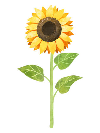 Sunflower plant clipart, hand drawn watercolor stock illustration. Round yellow flower clip art.