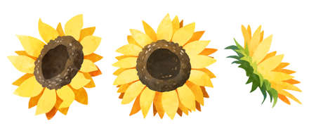 Watercolor sunflower bud clipart. Yellow flowers clip art set Stock fotó