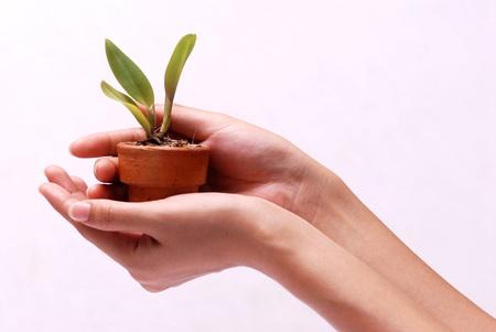 Hände halten junge Pflanze im Tontopf Standard-Bild