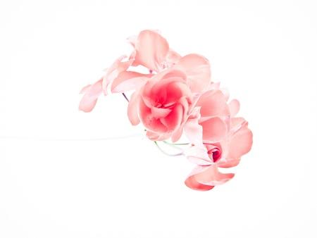 odors: Pelargonium