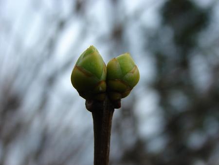 buds: buds