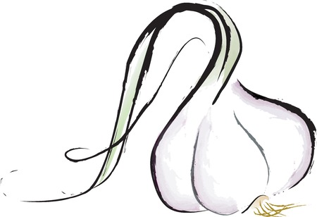 sumi: Garlic bulb Illustration