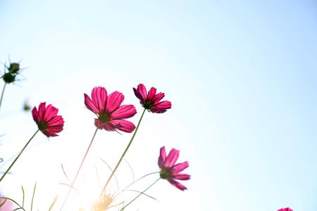 blomming: red flower  Stock Photo