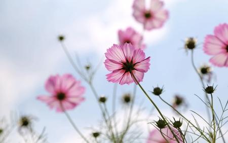 blomming: pink flower