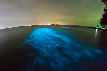 Bioluminescent plankton. Glowing wave with long exposure. Stock Photo