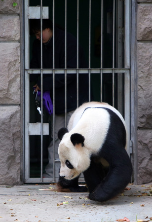 The panda and the keeper 新闻类图片