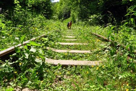 buxom: The girl photographer on old abandoned rails