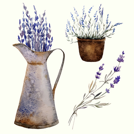 lavender oil: Provence lavender pattern decor flowers vector colored