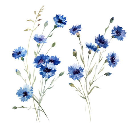 Beautiful vectorn pattern with blue flowers on white fon Çizim