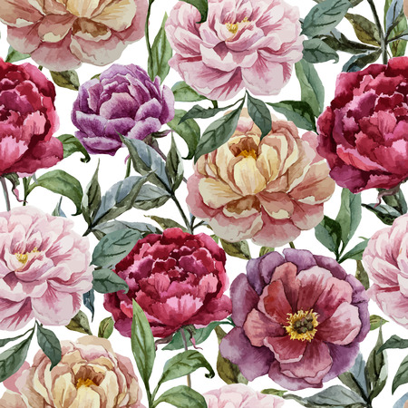 flower rose: Beautiful vector watercolor pattern with peonies on white fon