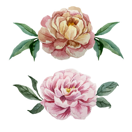 fon: Two vector watercolor flowers on white fon