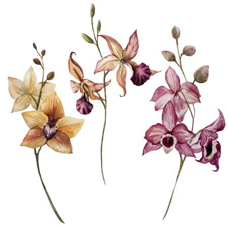 흰색 FON에 난초 꽃과 함께 아름 다운 벡터 패턴 일러스트