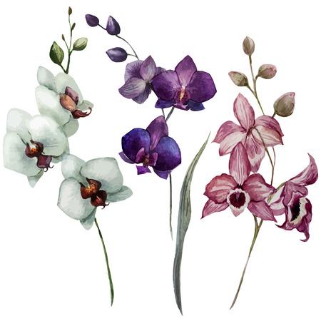 dessin fleur: Belle mod�le vectoriel avec des fleurs d'orchid�es sur fon blanc