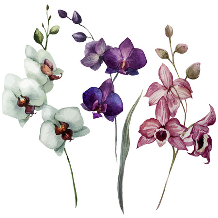flores exoticas: Modelo hermoso del vector con flores de las orquídeas en fon blanco