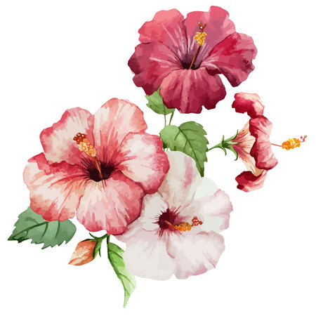 hibisco: Hermoso Fondo de rojo y flores color de rosa en fon blanco Vectores