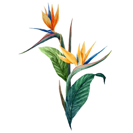 flores exoticas: Imagen hermosa del vector con el tr�pico hojea el fon blanco