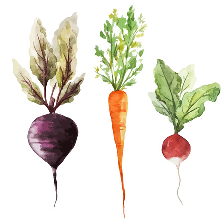 beet root: natural beet cabbage carrot eggplant texture root vegetables  Illustration