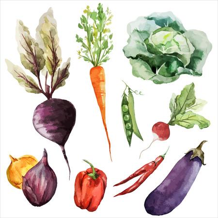 legumes: betterave naturelle carotte chou aubergines texture l�gumes-racines de v�g�tariens v�g�talien Illustration