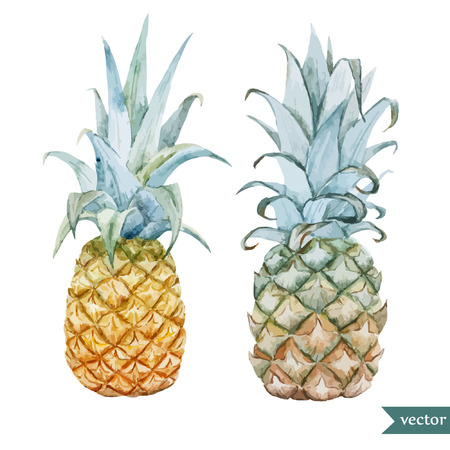 tropical fruits: Tasty pineaple Illustration