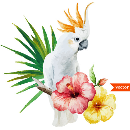 hibiscus flowers: white parrot Illustration