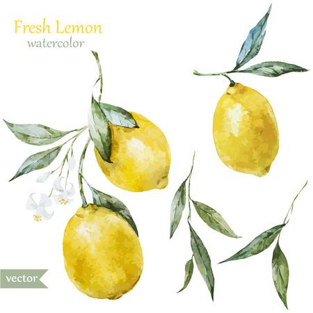 Beau motif de vecteur d'aquarelle avec des citrons jaunes sur brunch Banque d'images - 36354261