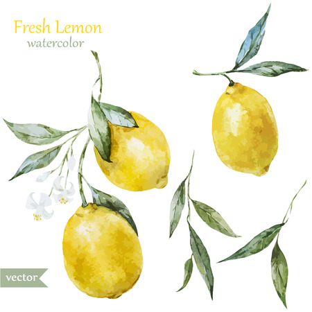 Beautiful watercolor vector pattern with yellow lemons on brunch Vectores