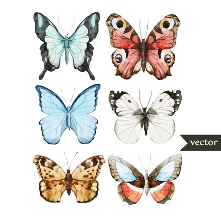 watercolor paper: Beautiful watercolor vector butterfly set different types