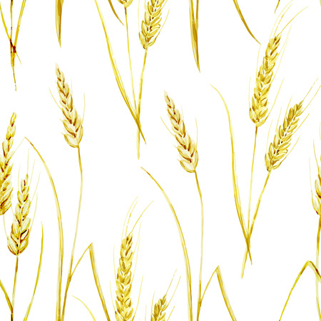 fon: Beautiful watercolor vector golden wheat pattern on white fon