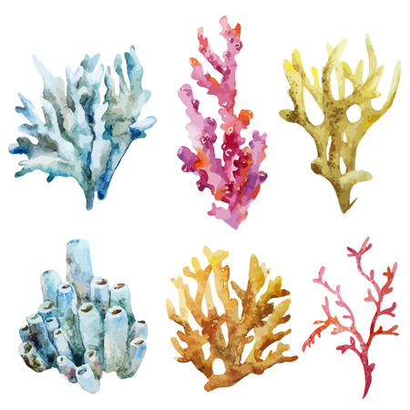 sea shells on beach: Beautiful watercolor vector set with ocean corals