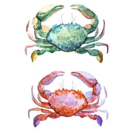 Beau motif de vecteur d'aquarelle avec des coraux et coquillages crabes Vecteurs
