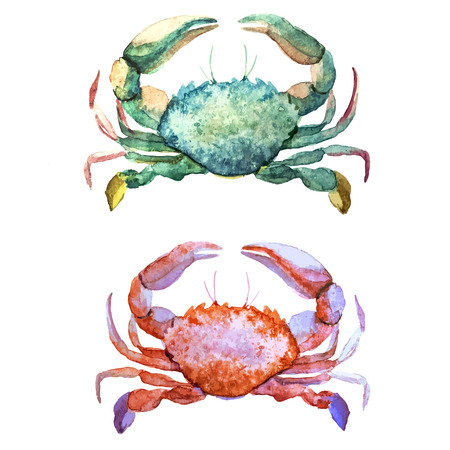 Beautiful watercolor vector pattern with corals shells and crabs Çizim