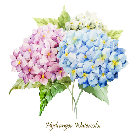Beautiful watercolor vector hydrangea bouquet different colors Çizim