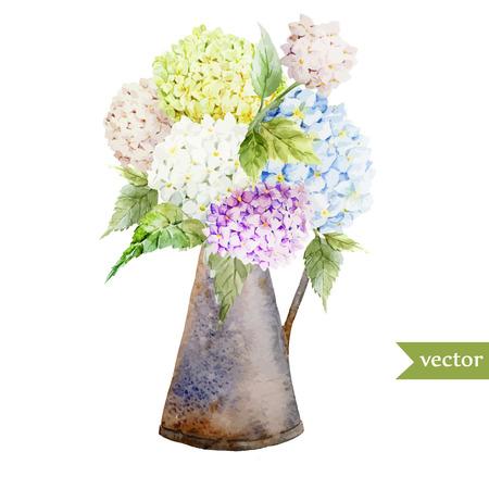 Beautiful watercolor vector hydrangea bouquet different colors Illustration