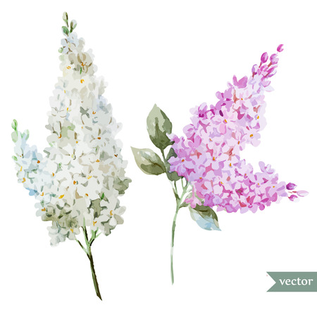 famous paintings: Beautiful watercolor vector lilac pattern flowers and leafs
