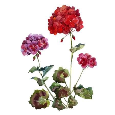 Beautiful watercolor vector set with red and pink geranium flwers