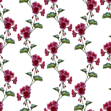 geranium: Beautiful watercolor vector pattern with red and pink geranium flwers