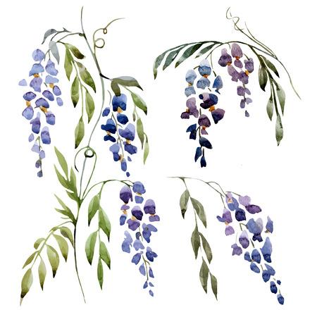 wistaria: Beautiful watercolor vector set with nice wistaria flowers