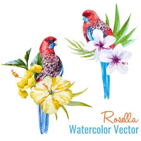 Beautiful vector illustration with nice tropical birds