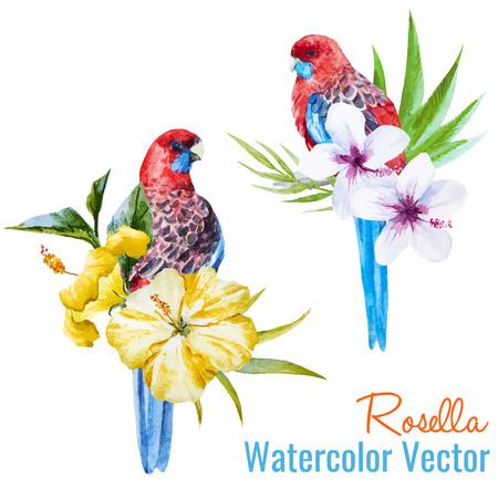 loro: Ilustraci�n hermosa del vector con bonitas aves tropicales Vectores