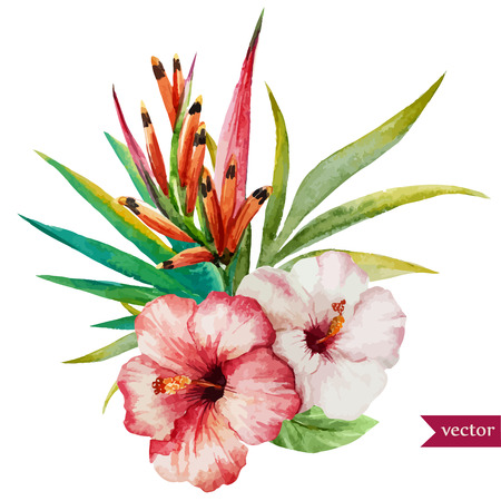 Beautiful vector illustration with nice tropical flowers  イラスト・ベクター素材