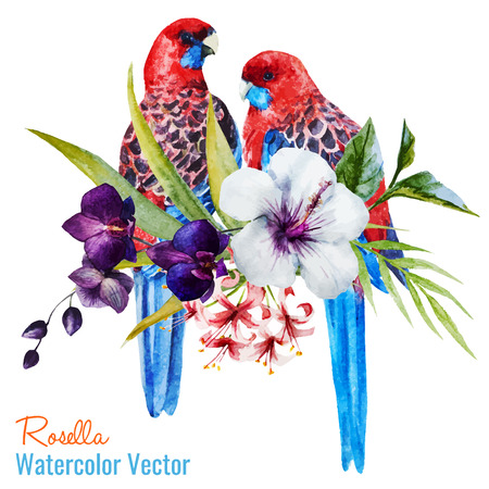 orchid isolated: Beautiful vector illustration with nice tropical birds