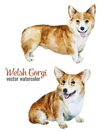 Mooie vector afbeelding met mooie aquarel velsh korgi pembroke