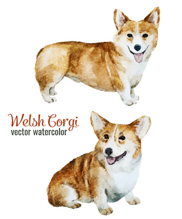 Beautiful vector image with nice watercolor velsh korgi pembroke Illustration