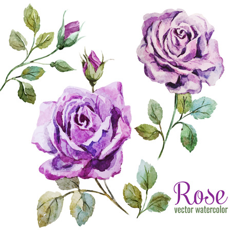 rose flowers: Beautiful vector image with nice watercolor roses