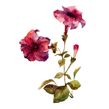 Beautiful vector illustration with nice petunia flowers