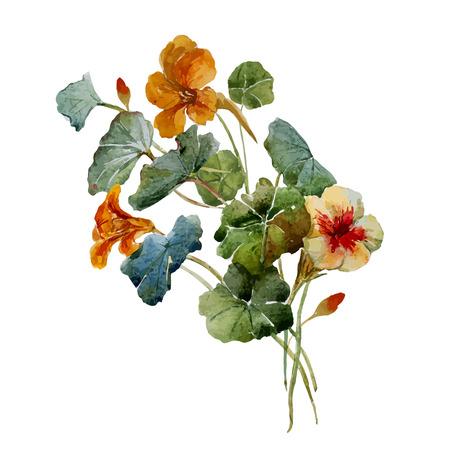 Beautiful vector illustration with nice watercolor nasturtium