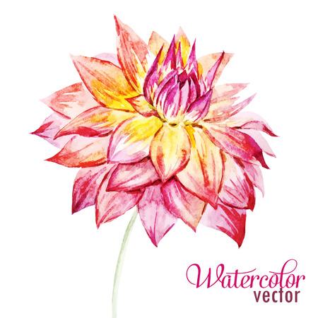 dahlia: Beautiful vector image with nice watercolor dahlia flowers