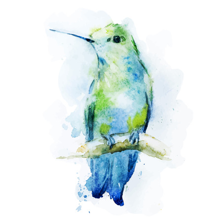 Beautiful vector image with nice watercolor colibri bird