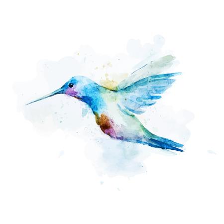 素敵な水彩画コリブリ鳥の美しいベクター画像  イラスト・ベクター素材