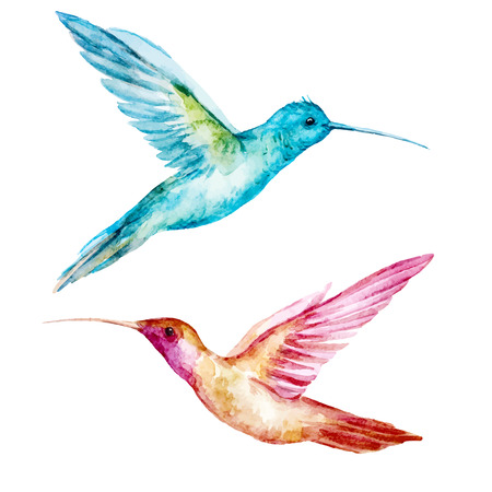 flying birds: Beautiful vector image with nice watercolor colibri bird